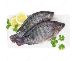 Talapia Fish Meat