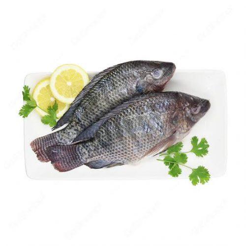 Talapia Fish Meat